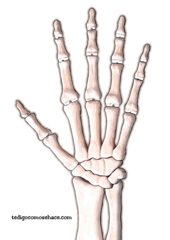 Results for Esqueleto De La Mano