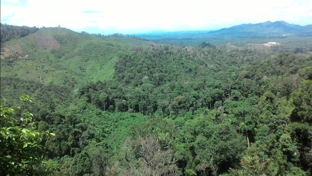 nama Bukit Berbunga berasal dari homogen tanaman bunga yang berjulukan  Wisata Bukit Berbunga Yang Tersembunyi