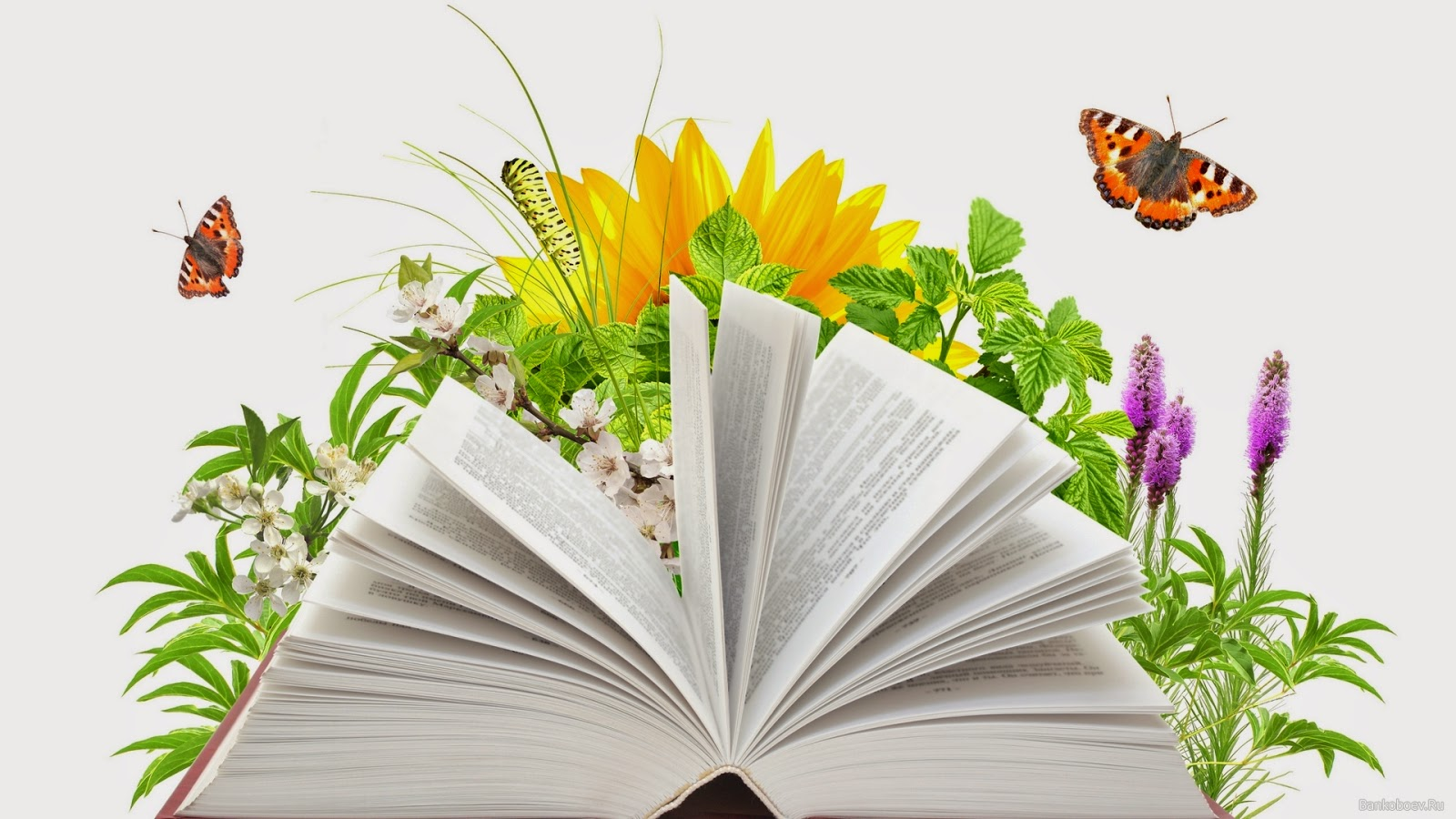 книги по написанию текстов