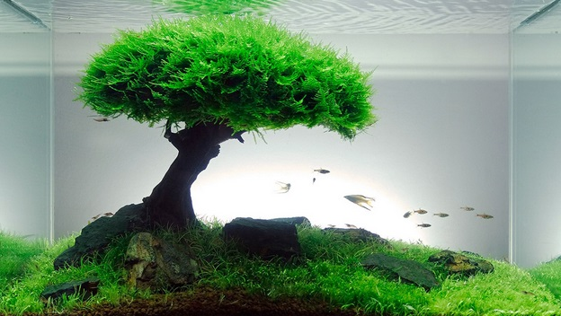 Membuat Pohon Bonsai Aquascaper