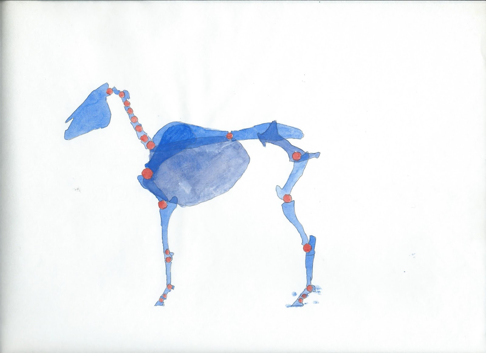 horsepower: Horse anatomy and movement