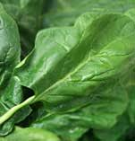 Nutritional contents of spinach leaves