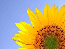 Bunga Matahari Si Pecinta Matahari Dari Amerika Yang Enak Dimakan