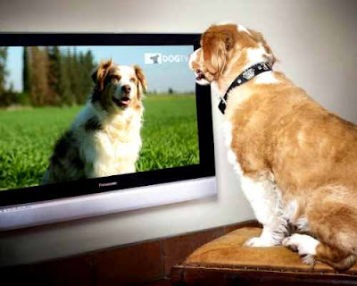 open the TV for your dog