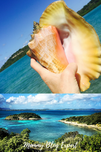 Barbuda Antigua Caribbean Conch Shell