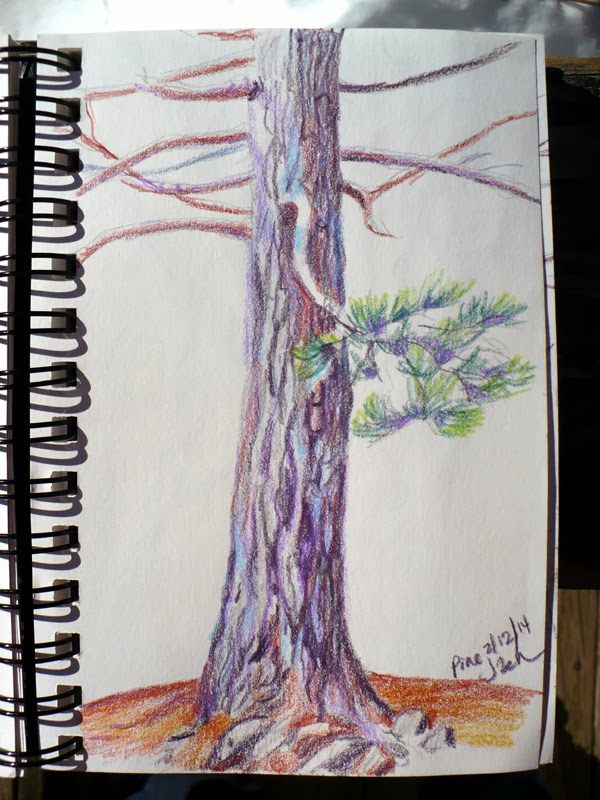 Pine tree colored pencil sketch