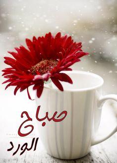 صور مكتوب عليها صباح الورد احلى صور صباح العسل صباح الخير