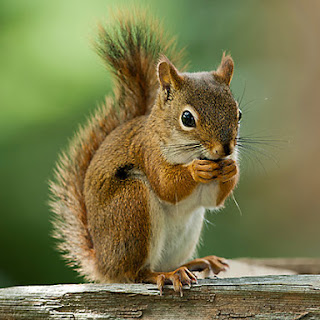 Here's How to Stop Squirrels From Stealing Bird Seed