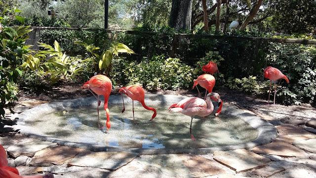Flamingos do Busch Gardens