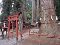日光二荒山神社の御神木と注連縄