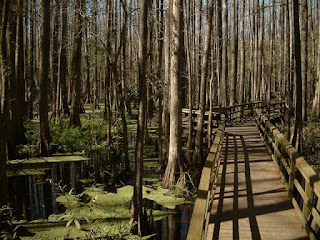 Highlands Hammock State Park in Florida for Camping Trips