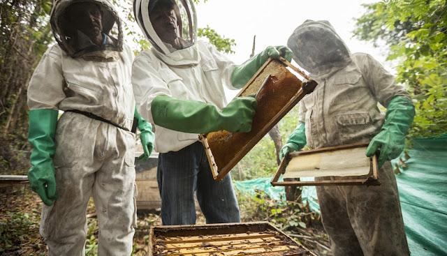 cosecha de miel