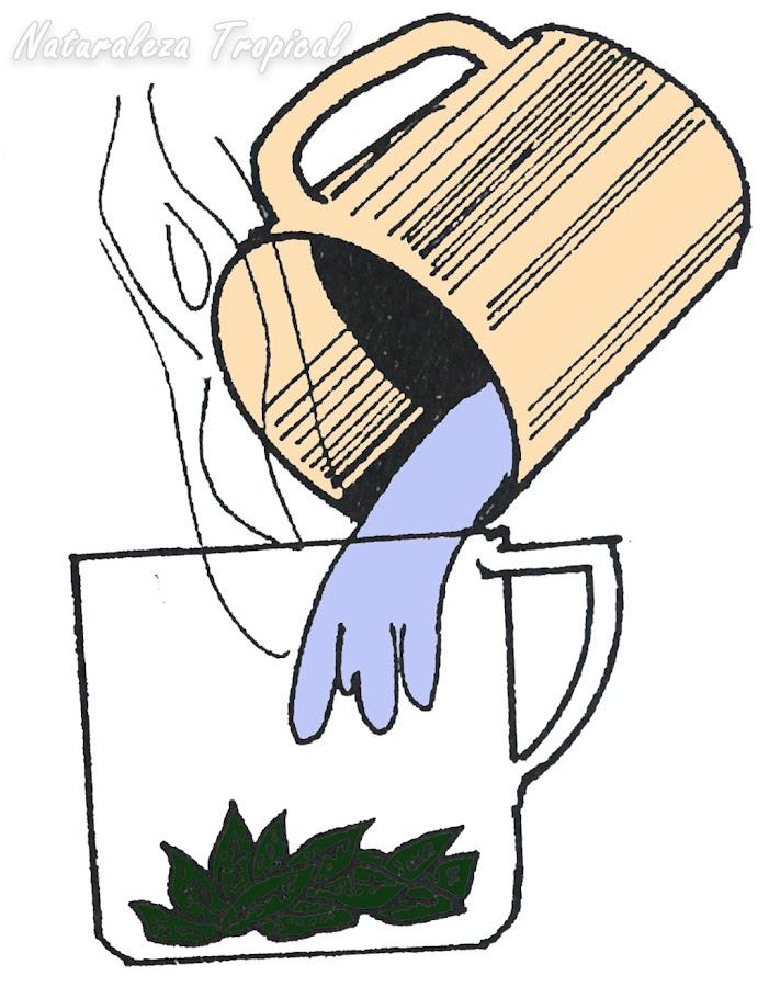 Agua recién hervida sobre las hojas de una planta medicinal.