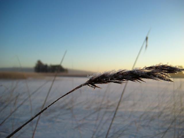 Päijänne, järvi, jää