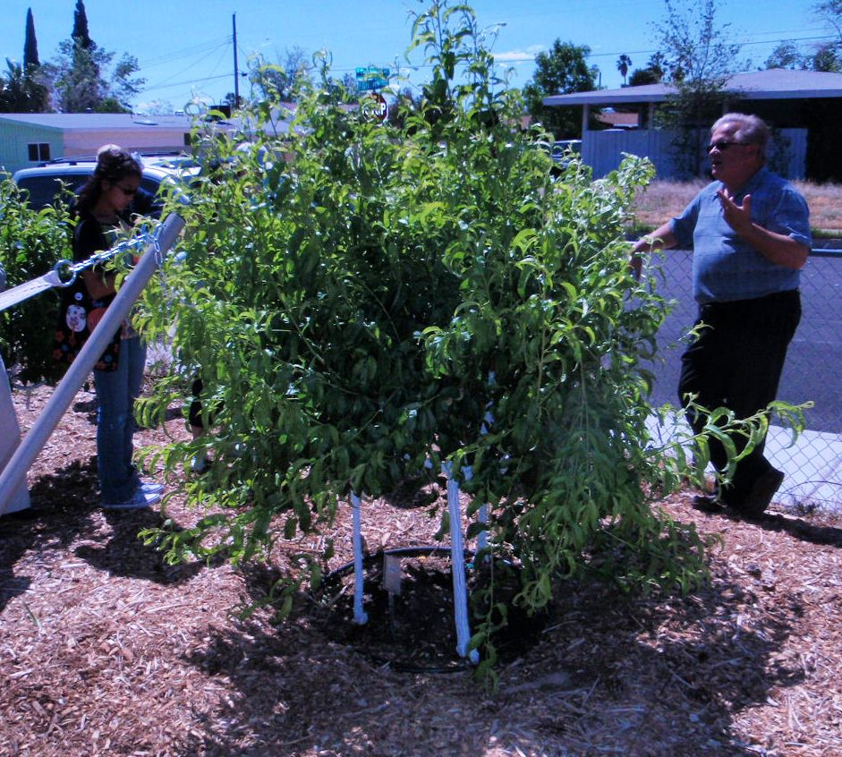 Xtremehorticulture Of The Desert Saving E In A Small Backyard With Multiple Trees Hole