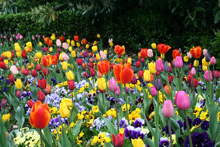 Flor | Variedades e Características das Flores