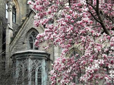 Spring Grace Church New York City