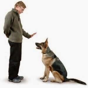 كيفيه تعليم الكلب أن يأتى إليك بمجرد النداء علية