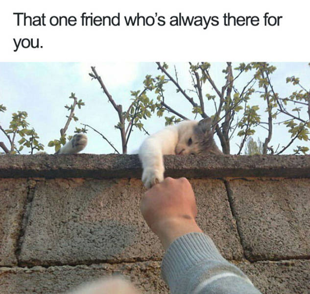 That one friend who's always there for you.