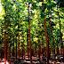 A importância do reflorestamento