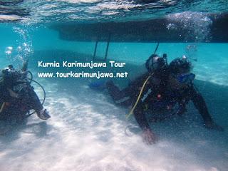 diving pemulamdi pulau cemara besar