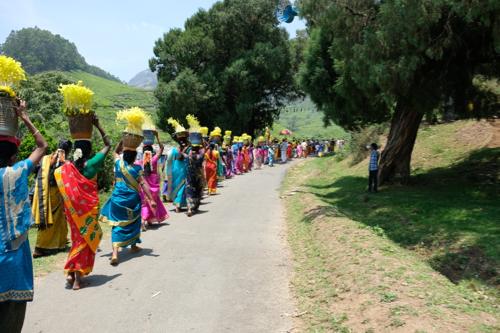 festival moisson wayanad