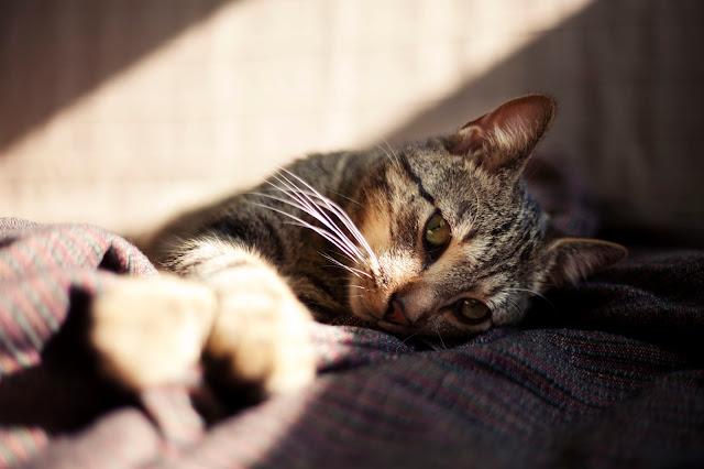 co zrobić z kotem na wakacje