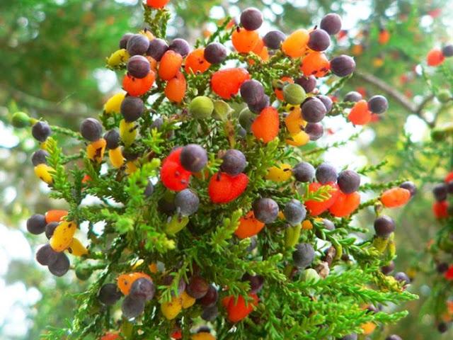 ¿Un árbol que da 40 frutos distintos? Increíble pero cierto