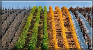 beaux-vin blog vin accord mets vin saison plat