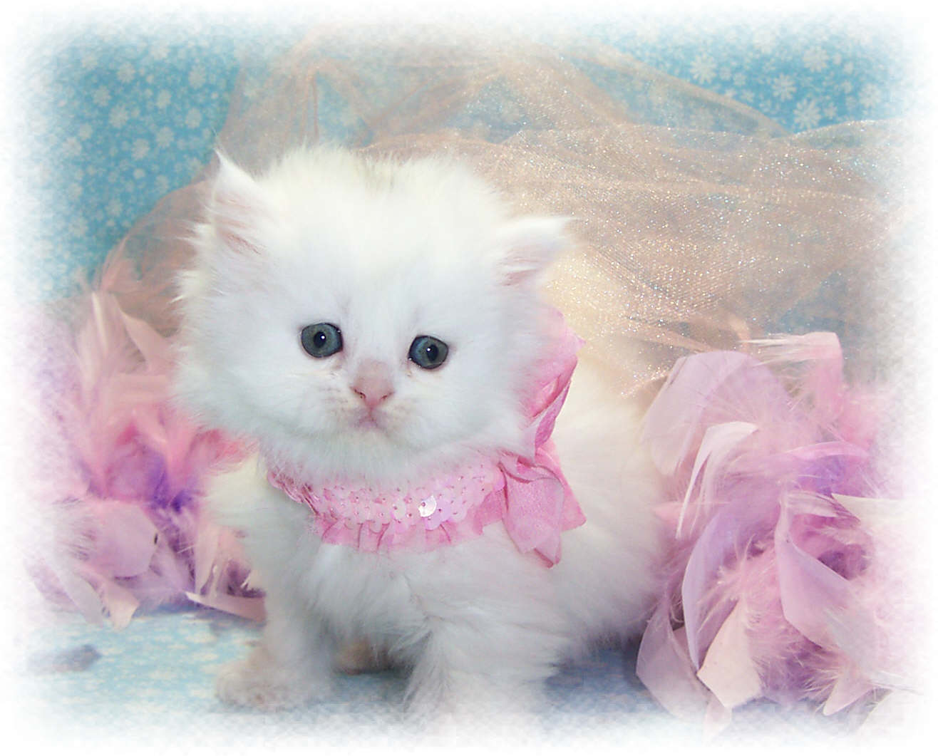 Most Interseting: Cutest Cat Wallpapers