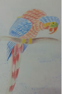 Parrot Colouring