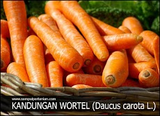 Kandungan lengkap yang terdapat pada wortel (Daucus carota L.)