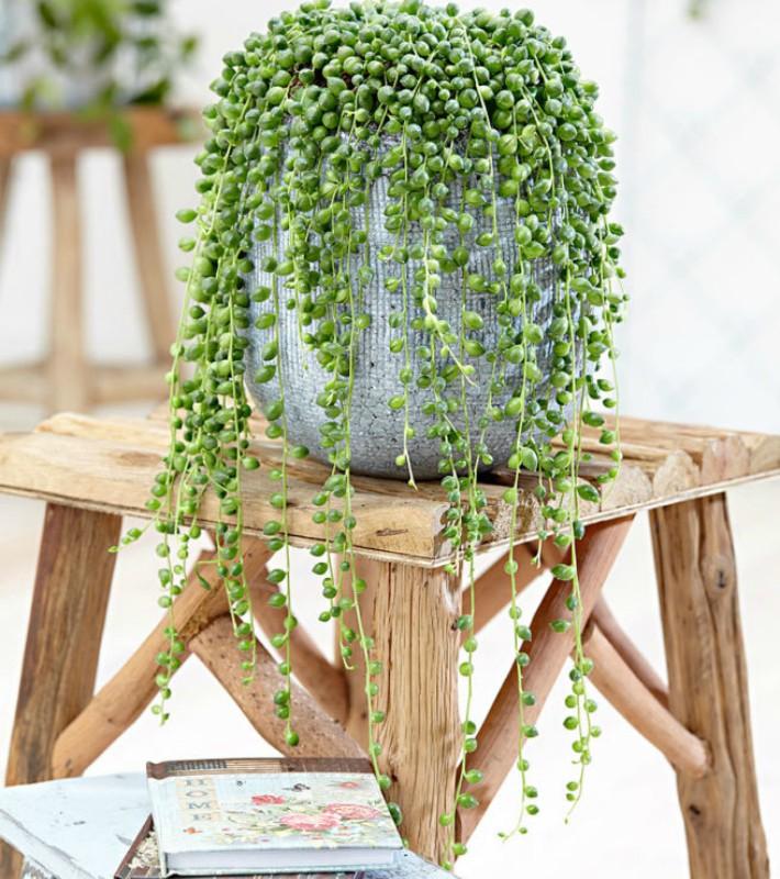 Las 9 mejores plantas colgantes