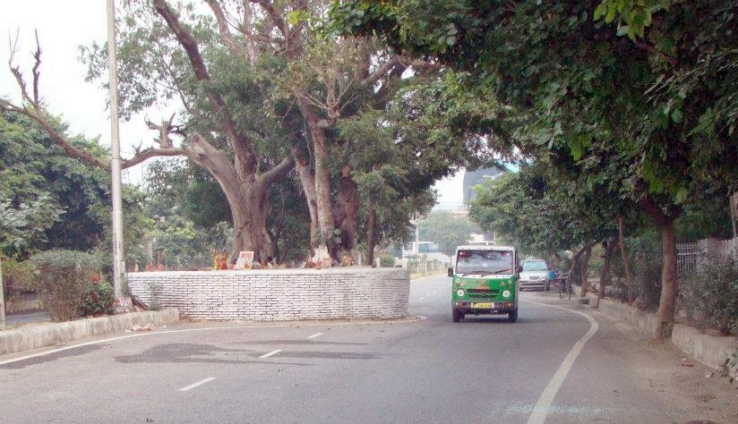 old peepal tree in sector 9 dwarka is one of the most haunted places in Gurgaon