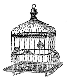 bird birdcage image clip art illustration drawing download