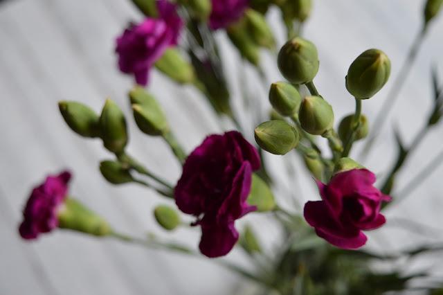 kwiaty, goździki, goździk, kolor biskupi, świeże kwiaty, blog, blogger
