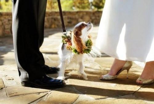 Chụp ảnh cưới đẹp với thú cưng