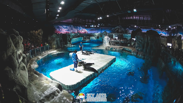 Seal performance at Hong Kong Ocean Park 2015