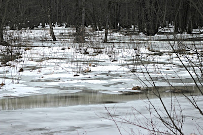 January 11, 2018 Noticing as the temperature goes up so does the water in the fields