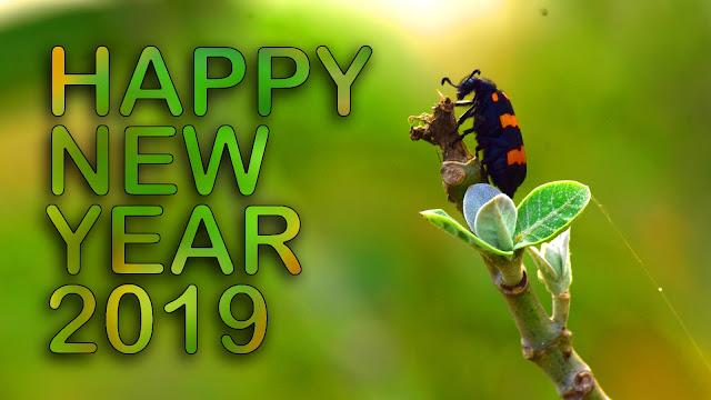 new year bhojpuri whatsapp status 2019