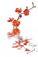 No la flor para la guerra 2, Francisco Acuyo