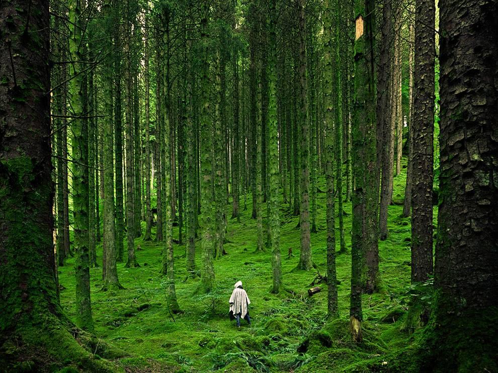 Las Fotos Mas Alucinantes: bosque verde