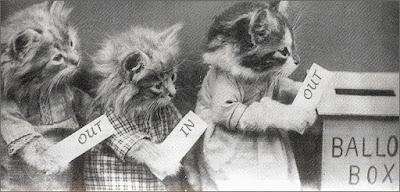 Kittens voting