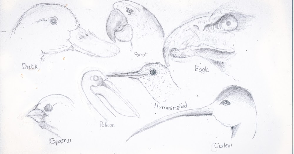 A Little Dose of Me: Different Types of Bird Beaks and