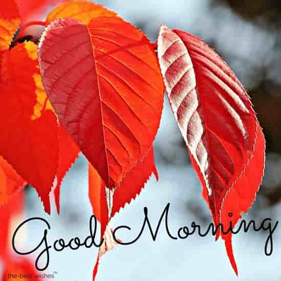 good morning image with red leaves