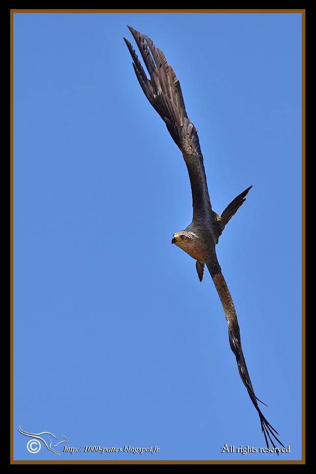 flight adaptation in birds pdf