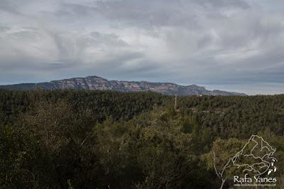Ruta: Pic del Vent (816 m). Una ruta con su encanto (Els 100 Cims)
