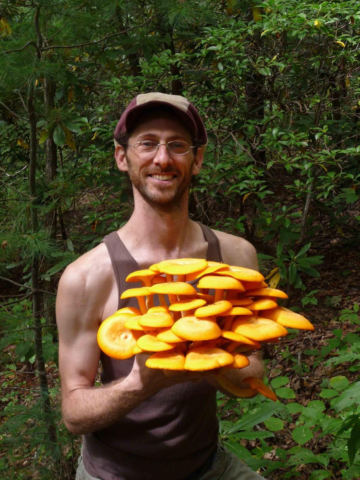 Jack O Lantern Mushroom Vs Chanterelle