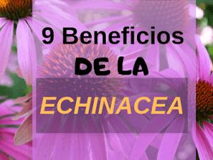 9 beneficios de Echinacea de resfriados al cáncer