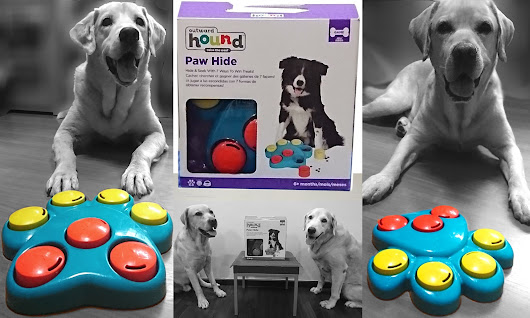 Flapper and Frodo Play: Paw Hide Puzzle Toy